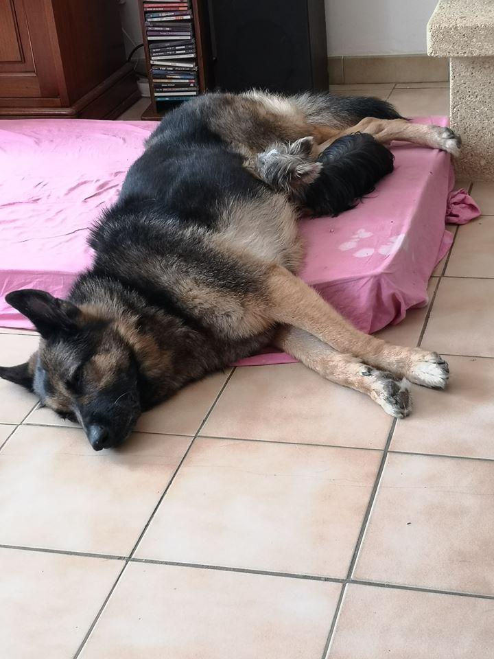 OREO (Yorkshire terrier )  40482516