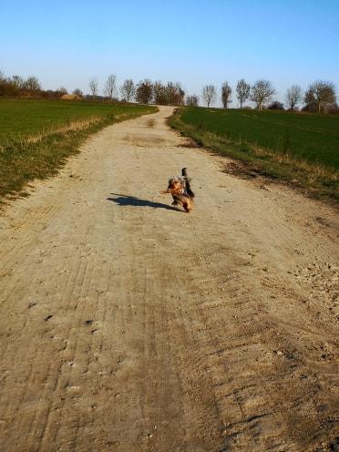 Oréo mon pitre ( Yorkshire terrier) - Page 2 52653211