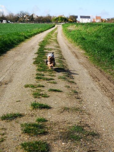 Oréo mon pitre ( Yorkshire terrier) - Page 2 54211611