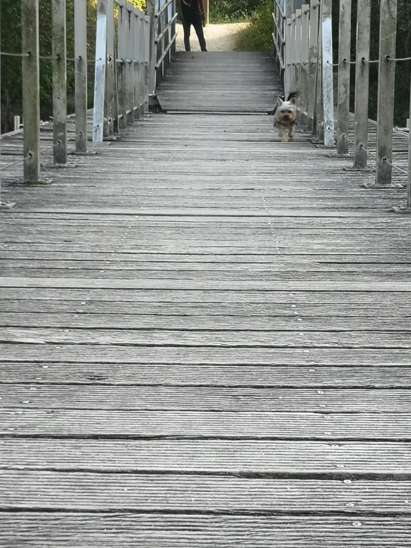 Oréo mon pitre ( Yorkshire terrier) - Page 6 Crapul10