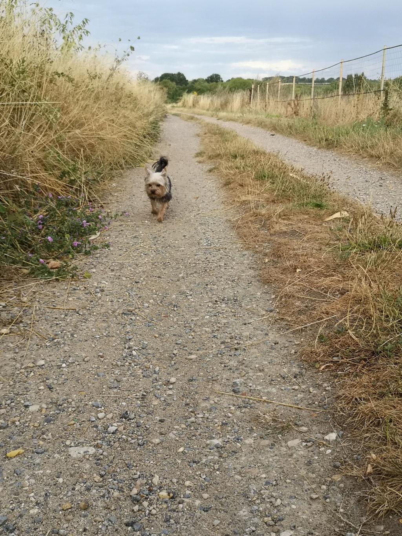 Oréo mon pitre ( Yorkshire terrier) - Page 6 Img_2308