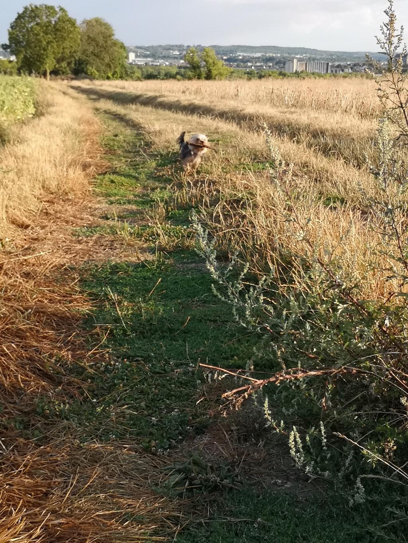 Oréo mon pitre ( Yorkshire terrier) - Page 6 Img_2310