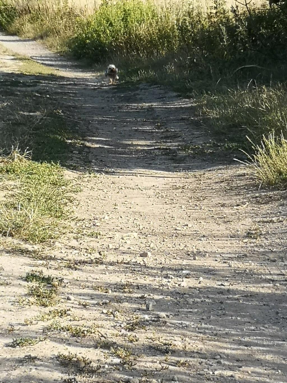 Oréo mon pitre ( Yorkshire terrier) - Page 4 Loulou84