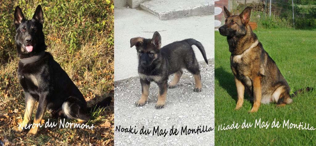 (P')NOAKI du Mas de montilla Montag19