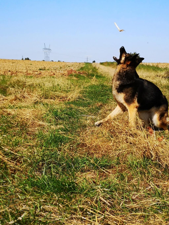 OREO (Yorkshire terrier )  Nounou38