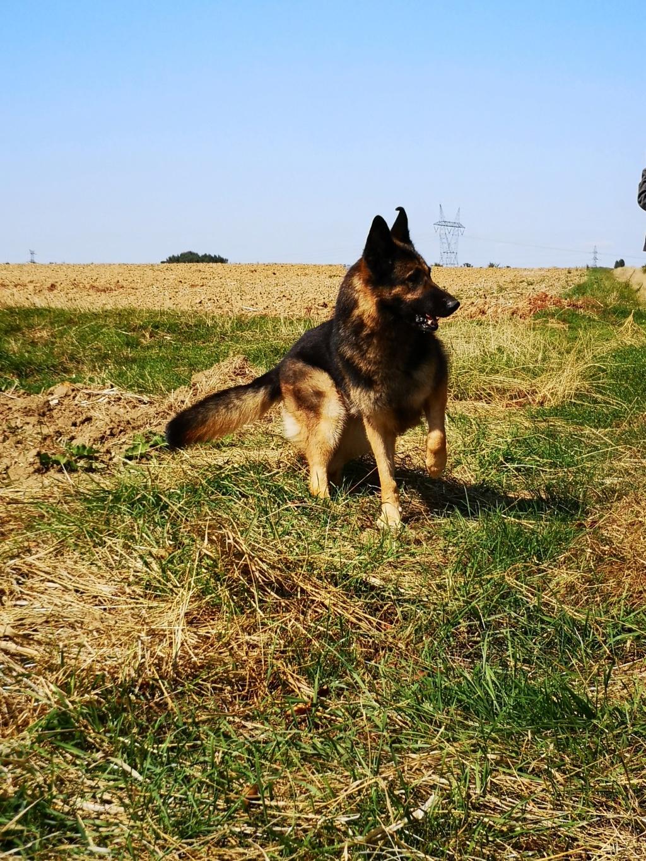OREO (Yorkshire terrier )  Pepett20