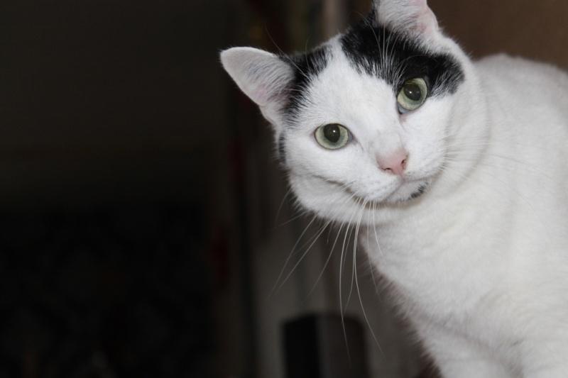 Violette - blanche et noire née en 2012 Img_2111