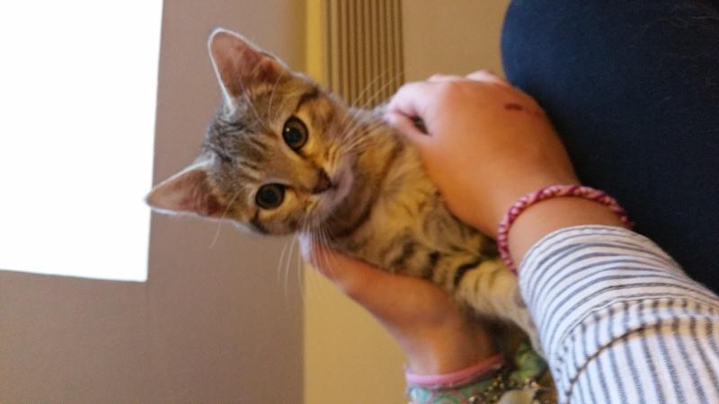 Pépito (ancien Loucky), chaton tigré gris né le 15/10/2015 20151210