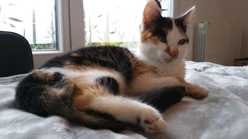 Leeloo, femelle tricolore née le 29 octobre 2015 20160140