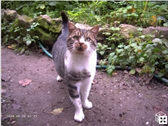 chat trouvé à Avesnes sur Helpe Captur10