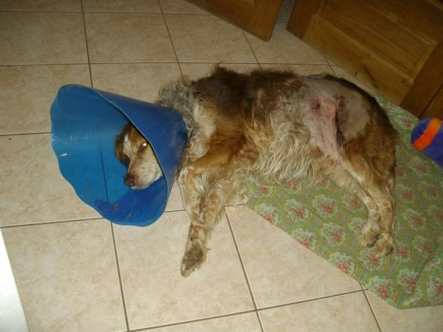 mon chien  Imgp1234