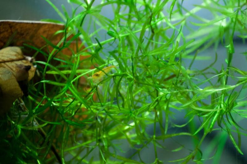 Bob's Shrimp - Page 12 Crevet10