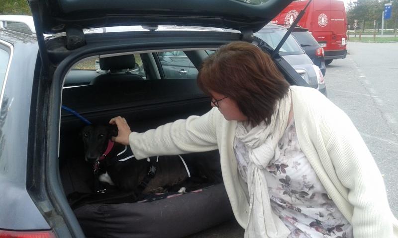 Morena tres belle galga noire agée de 5 ans Scooby France adoptee - Page 3 20151112