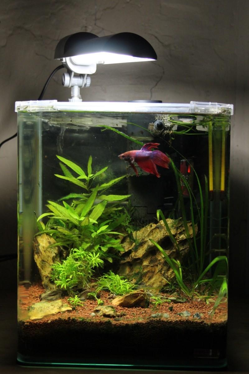 Mon Nanocube 20 litres  Img_6812