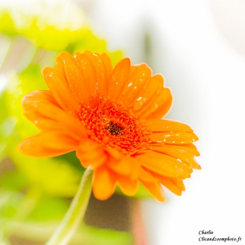 fleur ;) Fleur_10