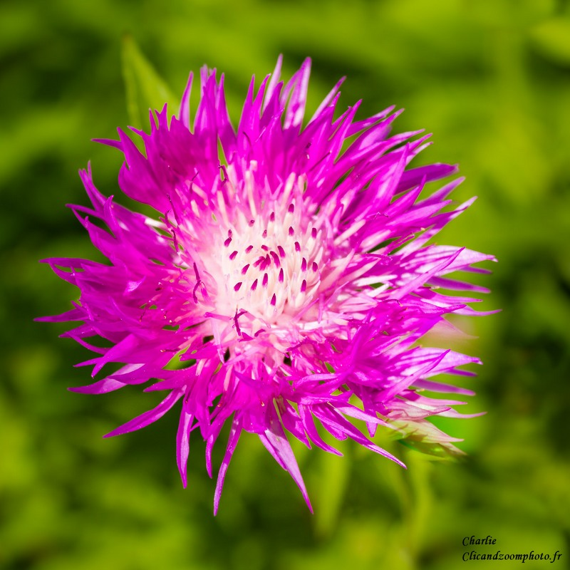 Fleur inconnue ;) Fleur_11