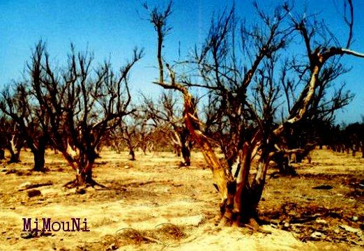 La problématique de l'eau dans le Souss Massa Eau_se10