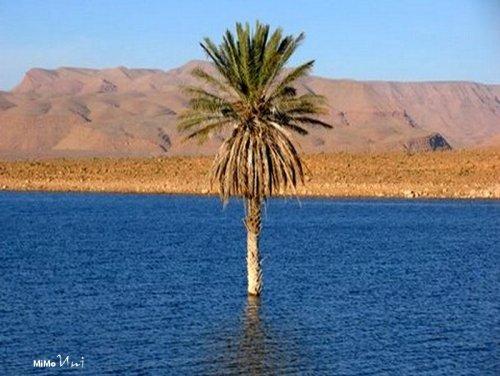 La problématique de l'eau dans le Souss Massa Errach10