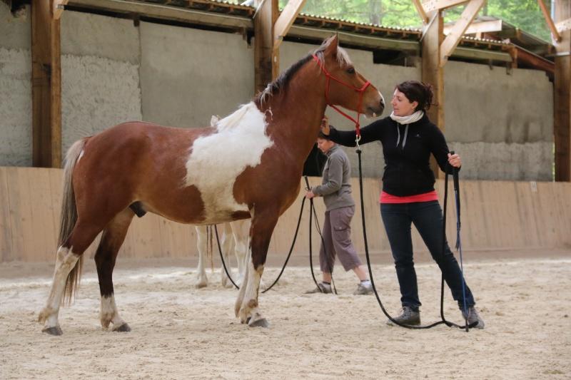 On juge vos chevaux au modèle Img_6010