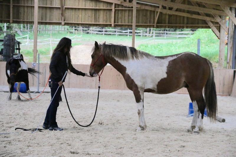 On juge vos chevaux au modèle Img_6311