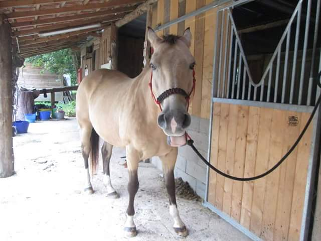 Des grimaces de cheval : venez voter  Fb_img10