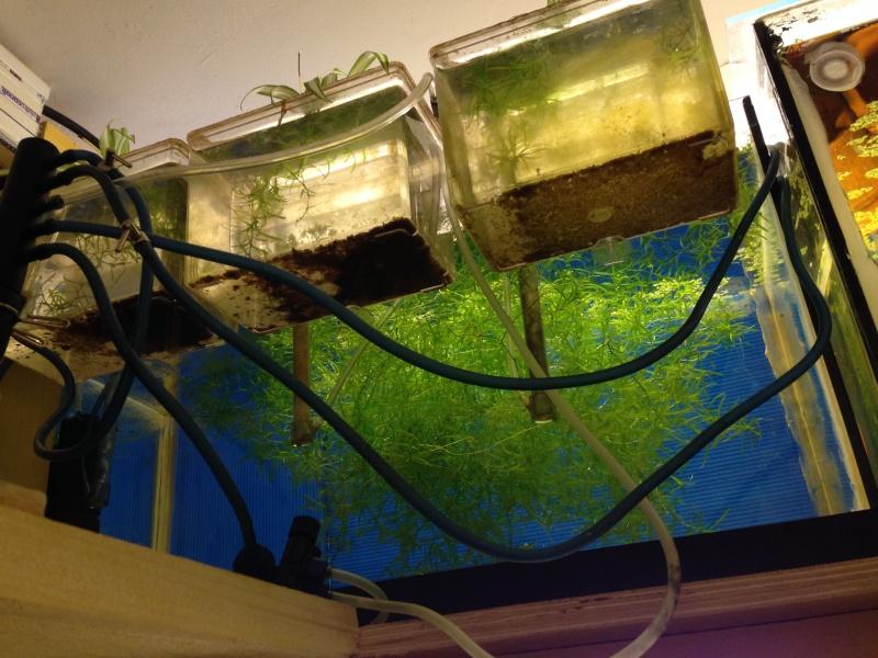 Ma fishroom prend forme doucement  Image16