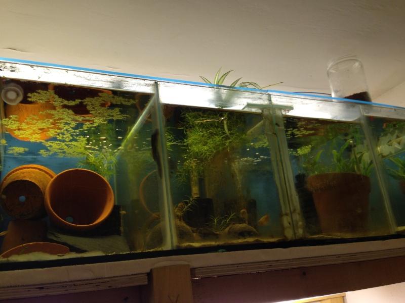 Ma fishroom prend forme doucement  Image17
