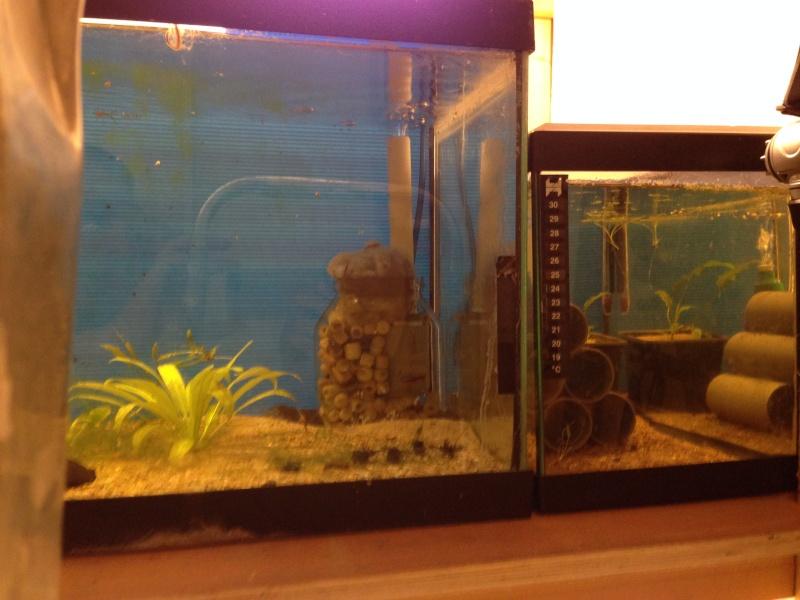 Ma fishroom prend forme doucement  Image18