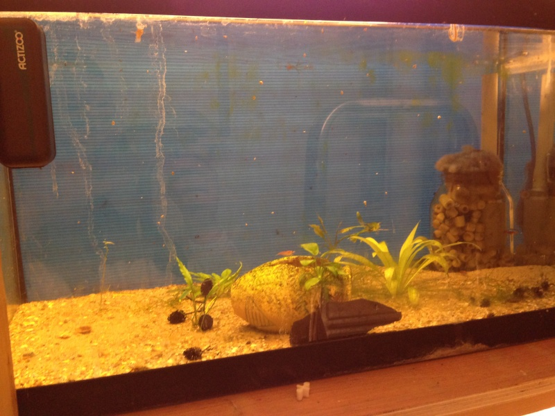 Ma fishroom prend forme doucement  Image19