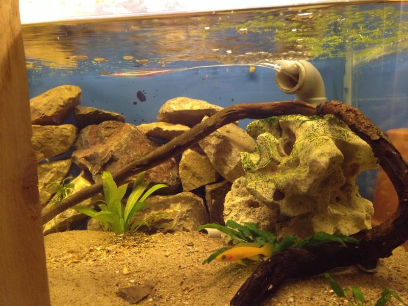 Ma fishroom prend forme doucement  Image22