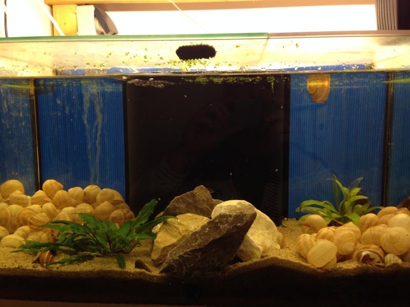 Ma fishroom prend forme doucement  Image23