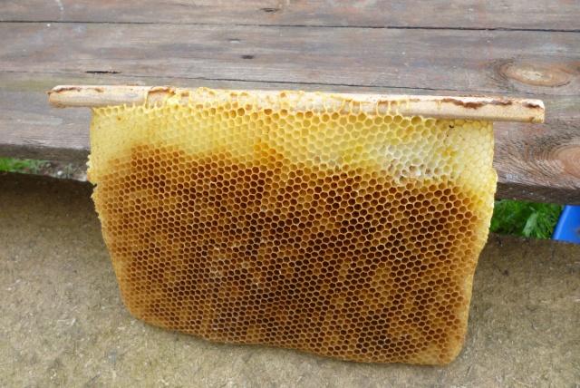 Mes ruches Warré 30110
