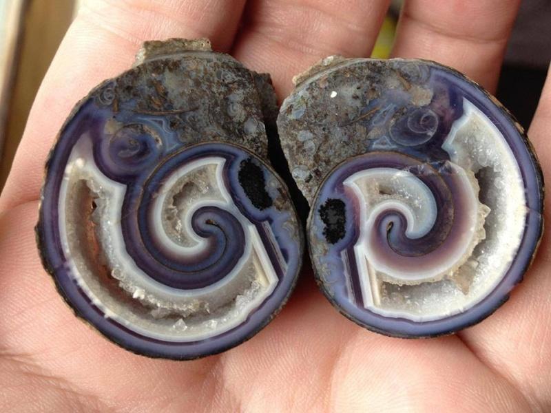 Sublimes photos de gemmes rares - Page 4 Agate_10