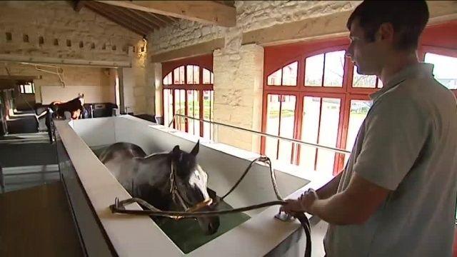 Un centre de balnéothérapie pour chevaux au Pian Médoc Balneo10