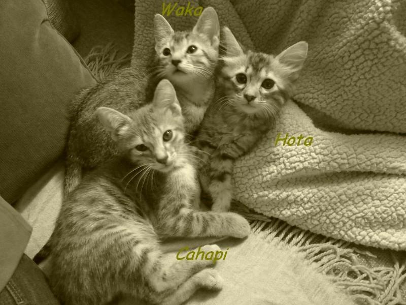 HOTA, SUNKI et ABEY Les_3-10