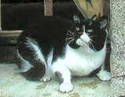 Le chat Jym Grospa11