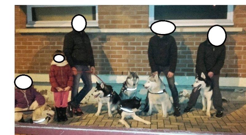Iko, Husky en fourrière REFU62 Captur13
