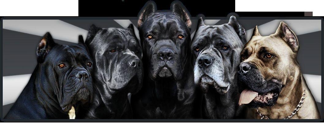 Элитные породы собак