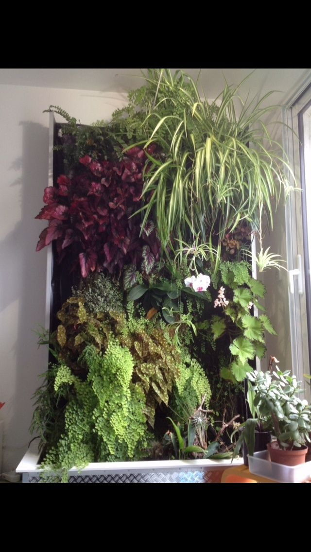 Mur végétal de Nico Mur_3_10