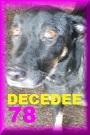 - FOURRIERE DE BACKA : NOUS DEVONS SAUVER LES CHIENS! 1 78_dcd10