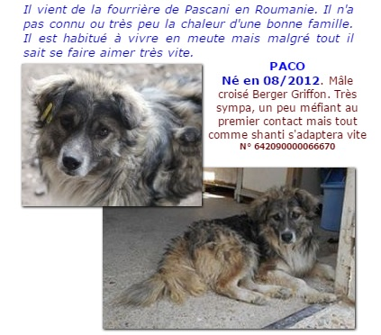 PACO - M-X, petite taille (PASCANI) - Pris en charge Asso. PAS SI BETES  - Page 2 Paco10