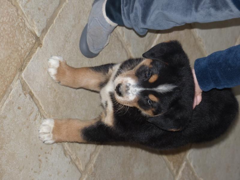mon chien... P1150310