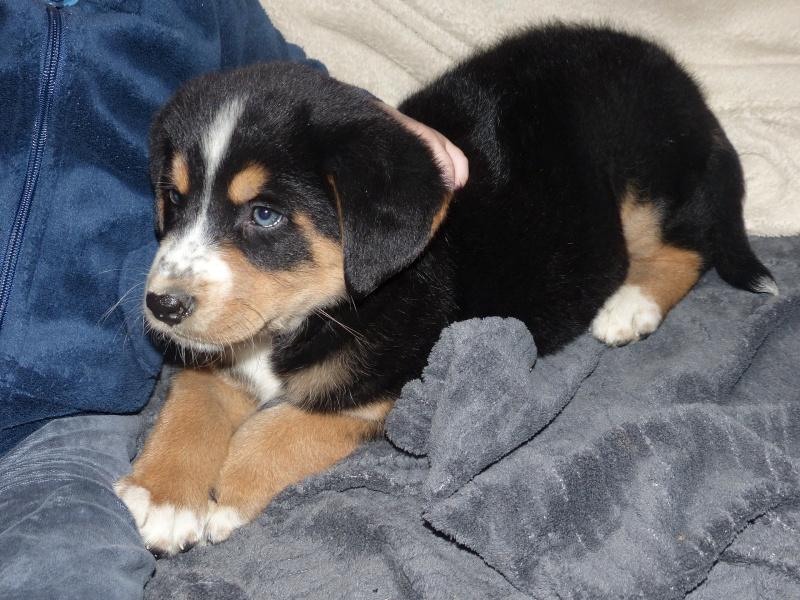 mon chien... P1150311