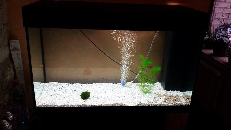 Filtre et crevette  Aquari11