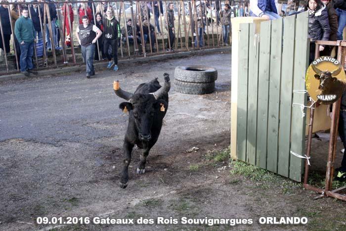 09..01..2016..Souvignargues Gateaux des Rois   _mg_0033