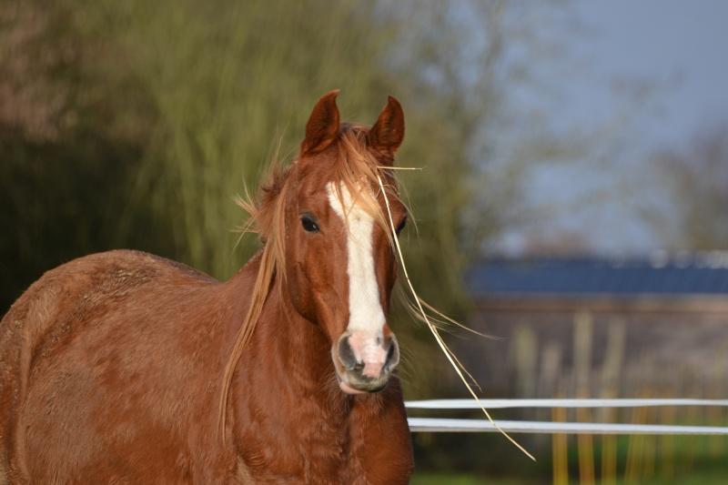 Heldon, PSAR ataxique, un cheval que l'on vouvoie Dsc_0220