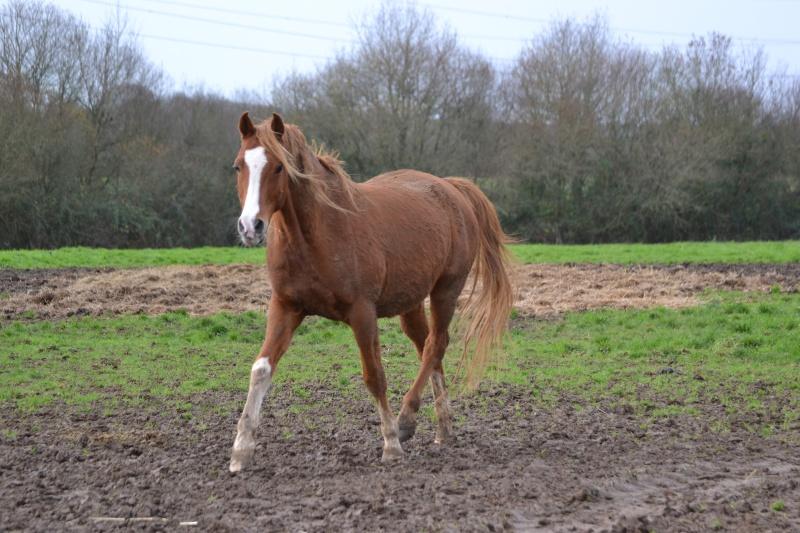Heldon, PSAR ataxique, un cheval que l'on vouvoie Dsc_0325