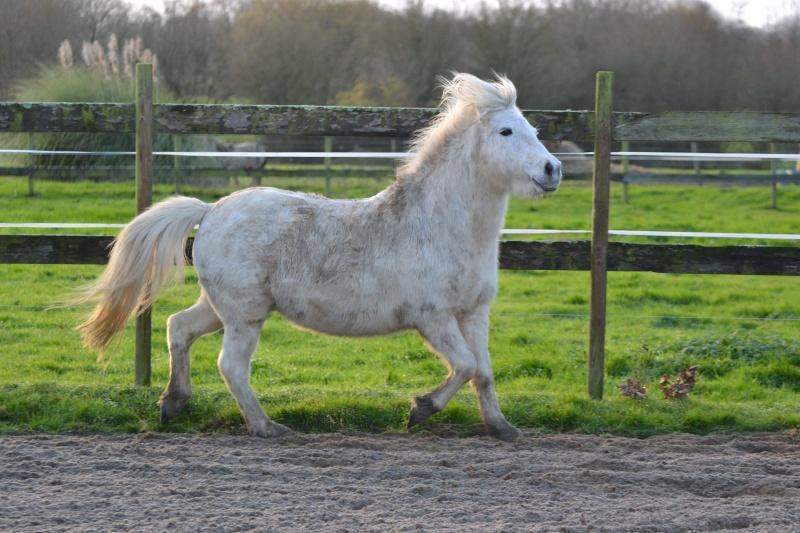 Machu, ancien poney de club Dsc_0915