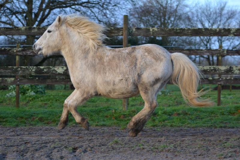 Machu, ancien poney de club Dsc_0916