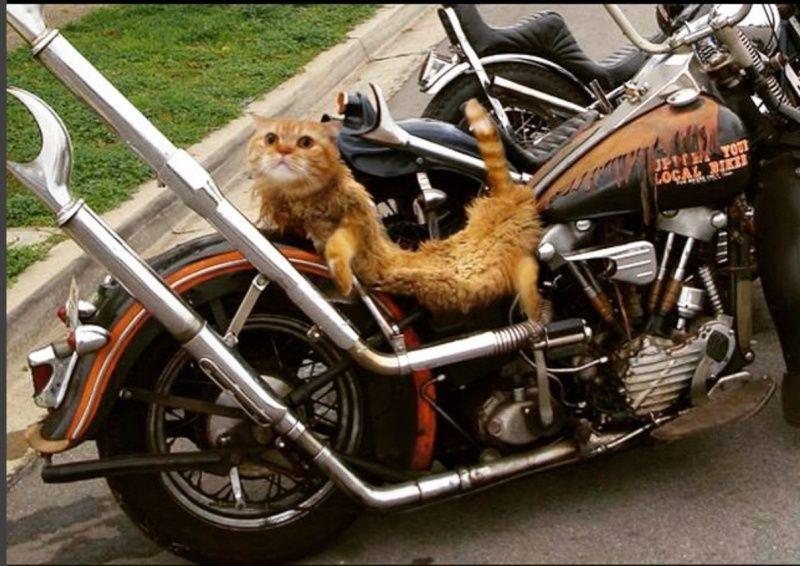 Les vieilles Harley....(ante 84) par Forum Passion-Harley - Page 21 Captur11